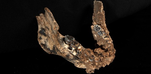Mandibula encontrada en Kenia. |Nature
