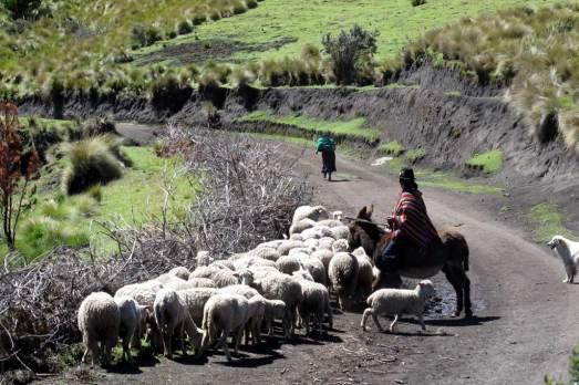 Ganadero en los páramos de Riobamba (Ecuador). Rosa M. Tristán