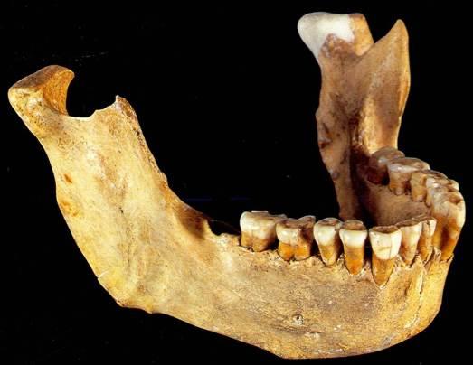Mandibula de neandertal hallada en Zafarraya (Granada)