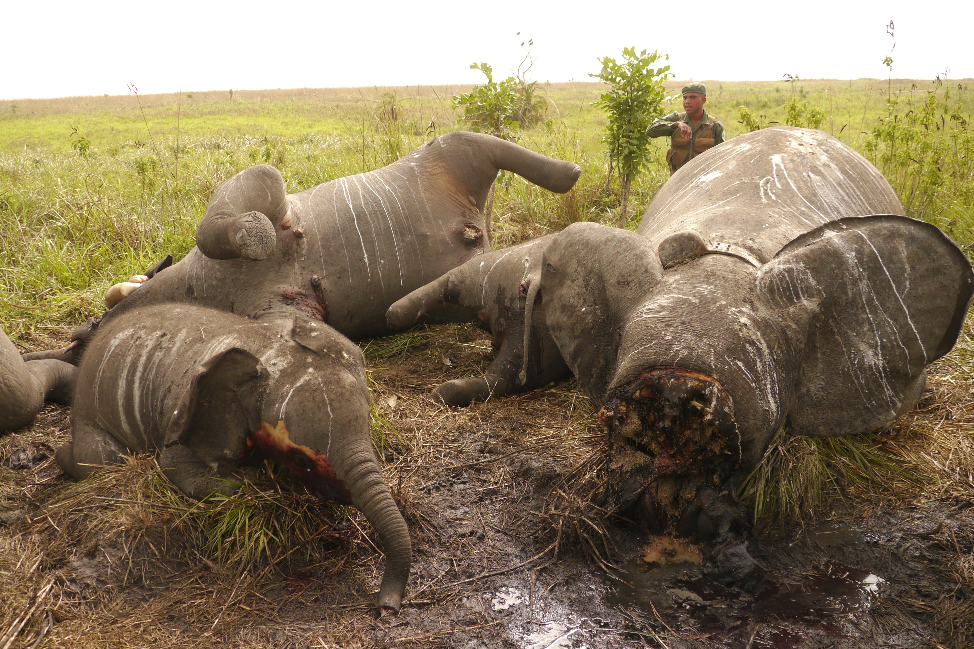 Niños y elefantes, sin derecho a la vida ni a la libertad | Laboratorio  para Sapiens