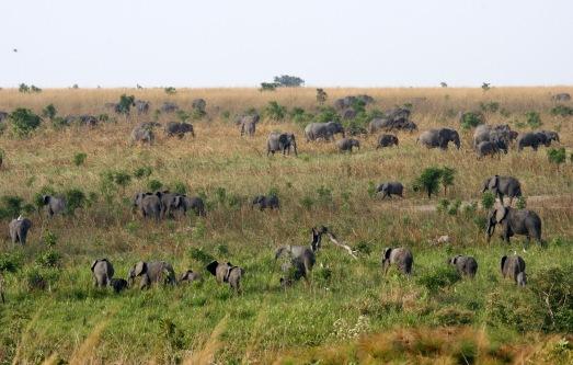 Elefantes en el Parque Nacional Garamba. @Nuria Ortega