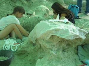 Caparazón de una tortuga gigante en Batallones 3. |RMT