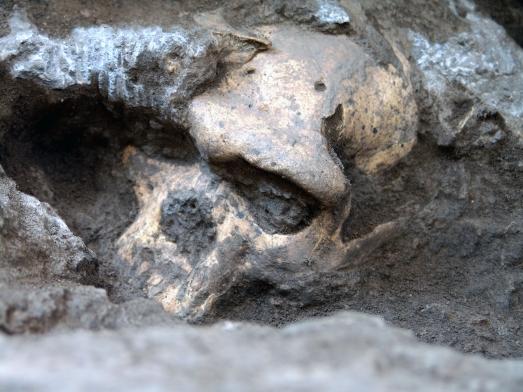El espectacular Cráneo 5 de Dmanisis, aún semi-enterrado. |Science