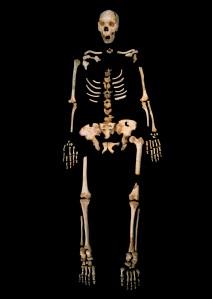 Un esqueleto de 'heidelbergensis' de Atapurerca.|NATURE