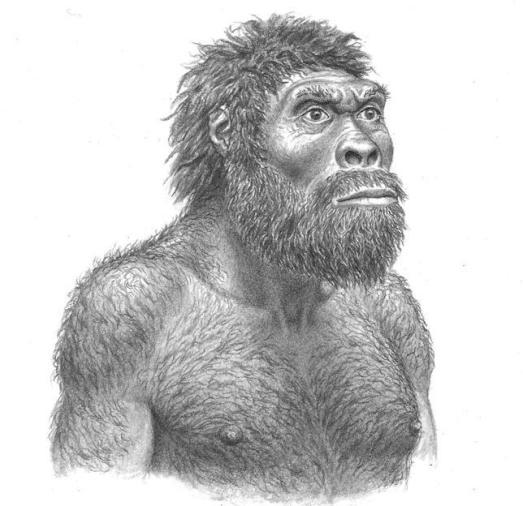 'Homo georgicus', según el cráneo 5. /J.H. MATTERNES