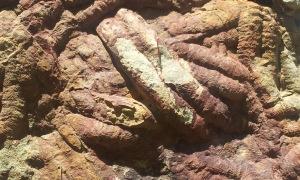 Destrozo de crucianas en Cabañeros.|R.M.T.