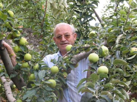 Mi padre entre sus manzanos. Un hombre apegado a la tierra.