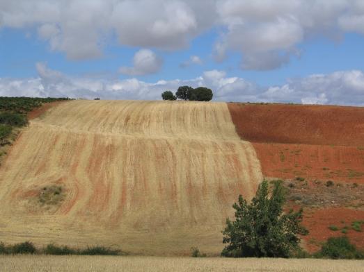 Las tierras de mis antepasados, en Fuentenebro (Burgos)