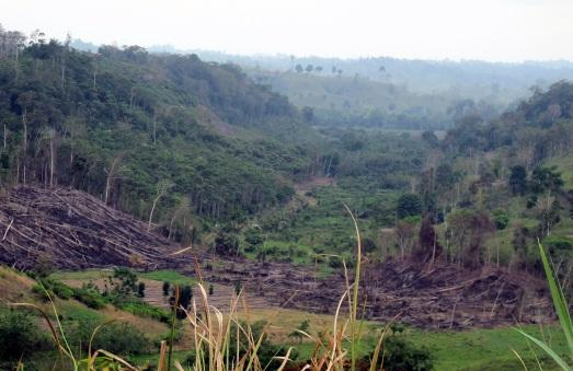 Bosque tropical talado en Esmeraldas (Ecuador) para plantar palma africana. |R.M.T.