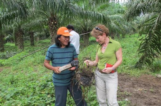 Junto a un cultivo para aceite de palma, Ermel Chávez, del Frente de Defensa de la Amazonía en Ecuador, me muestra cómo bulle el petróleo bajo la tierra. La biorremediación es la solución, afirman los jueces y los ecologistas.|R.M.T.