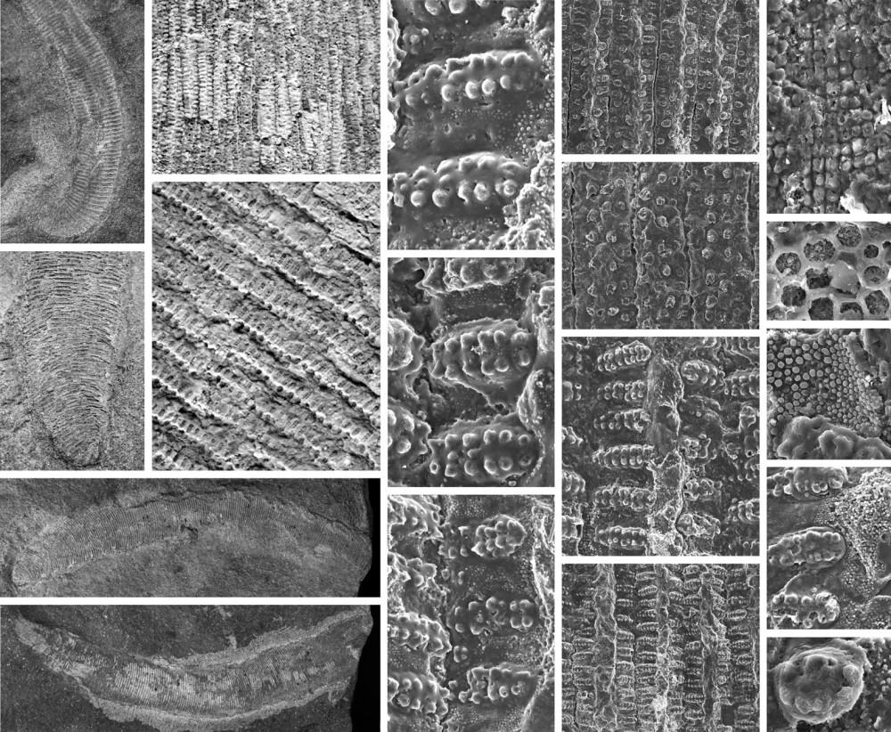 Los primeros gusanos marinos de África,en mitad del Sáhara (4/4)