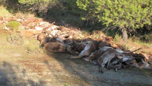 Así se caza en un coto de Castilla-La Mancha. |Eldiario.es