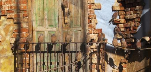 Cernícalos primilla, del programa de cría y reintroducción de GREFA. |ROSA M. TRISTÁN