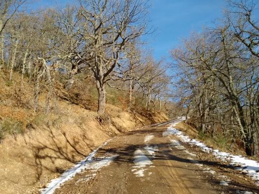 Árboles, con las raíces al aire tras hacer la pista.| R.M.T.