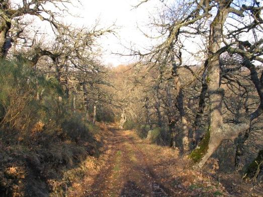 Nochevieja en Picos 20030013