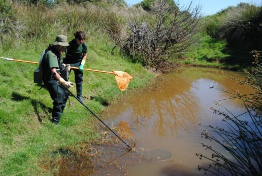Captura de peces invasores con pesca elétrica en Andalucía. Una gota de agua en el desastre. |Junta de Andalucía.