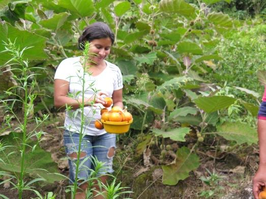 Frutos colombianos,