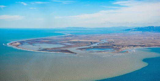 Delta del Ebro. @Carlos Montserrat /SEO7Birdlife